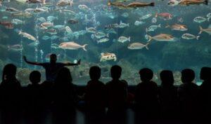 Cretaquarium   Greece's Largest Aquarium is on Crete